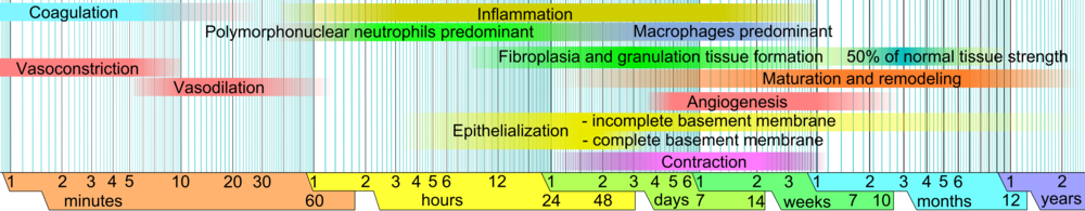 Wound_healing_phases