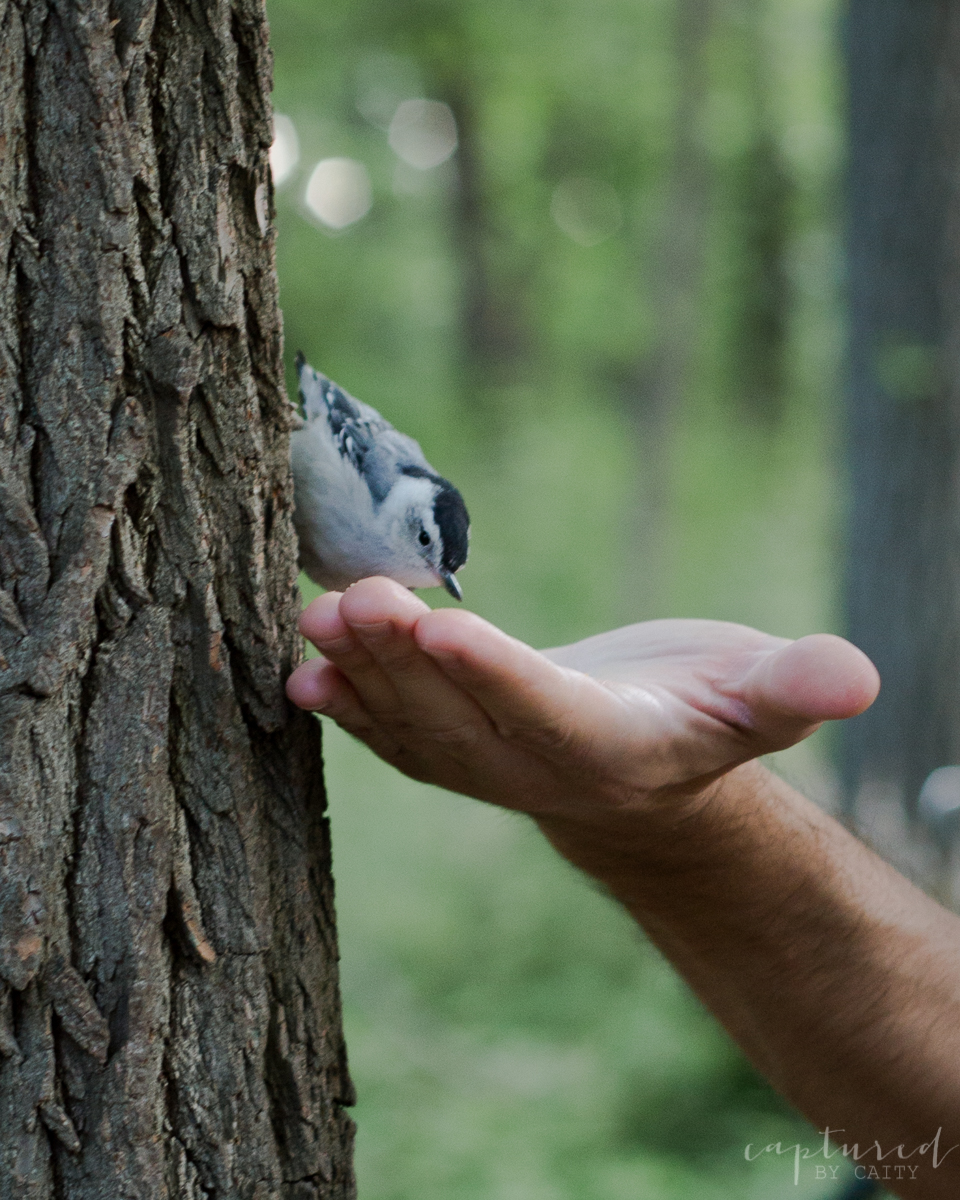 Nuthatch bird eating out of a guests hand. I told you it was magical!