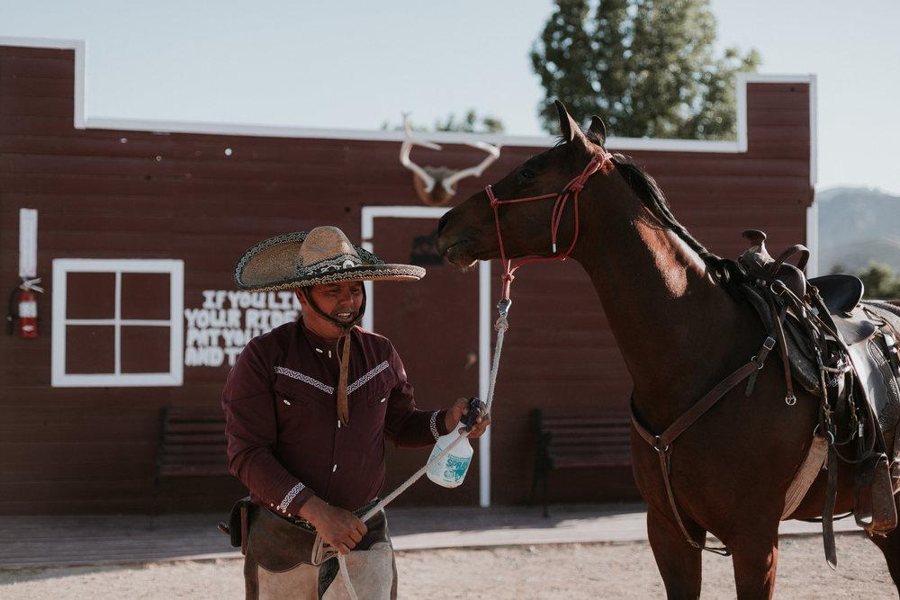 Matt's horse, Luna.
