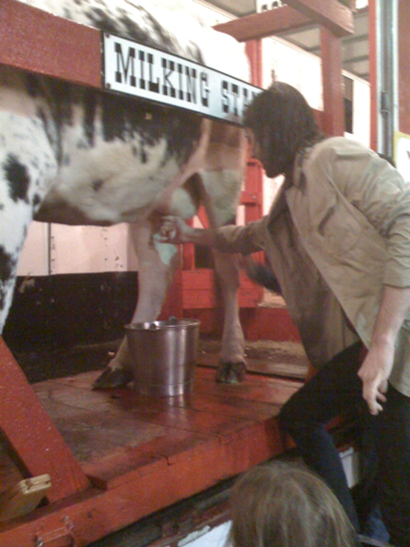 Milking a cow at the Indian River County Fair.
