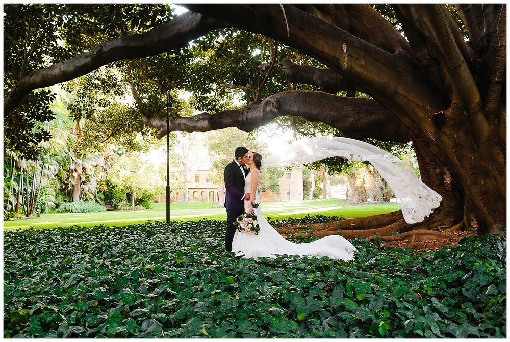Big tree at UWA wedding