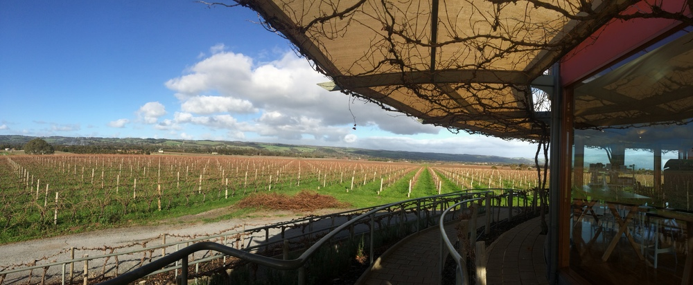 The picturesque view of Hugh Hamilton Vineyards.