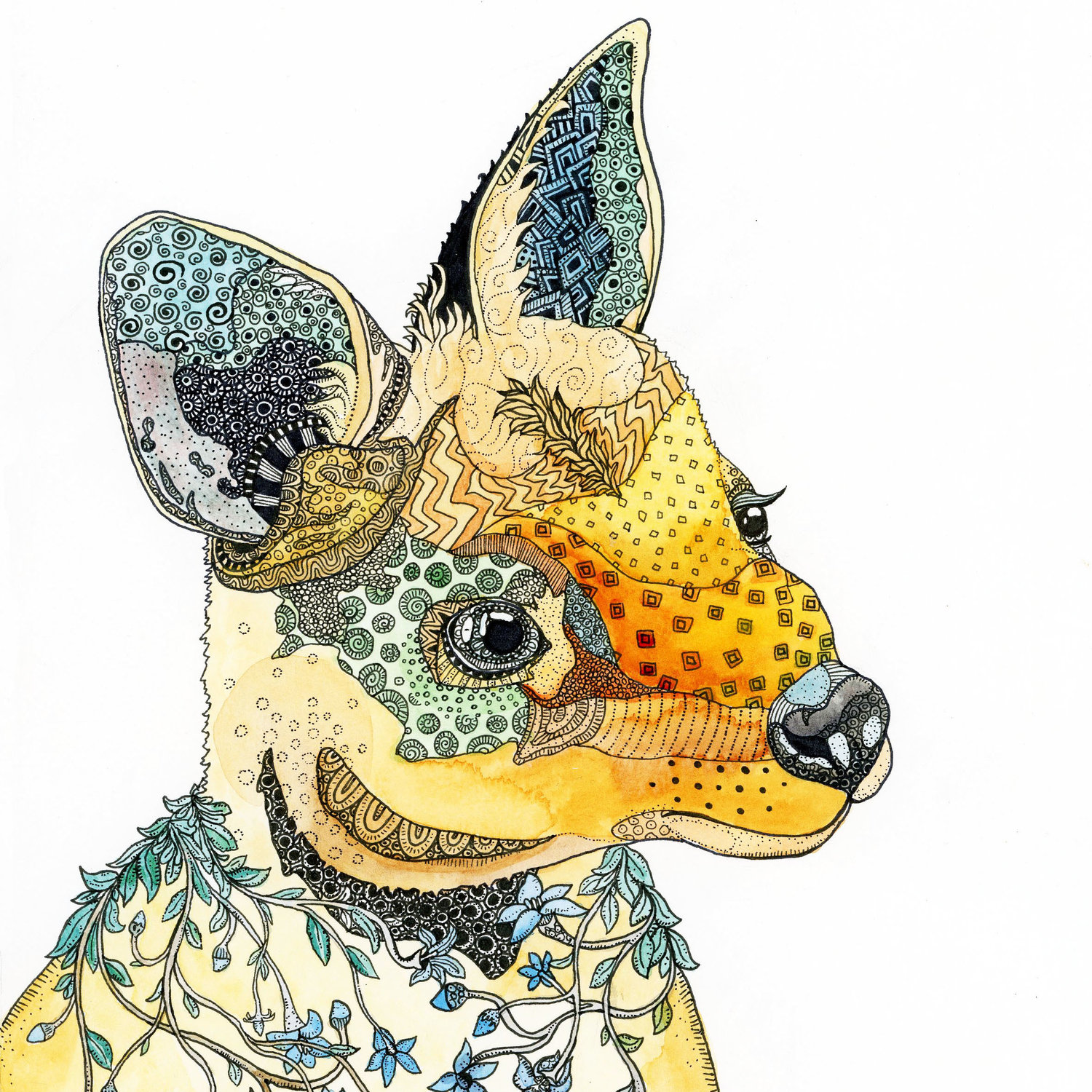 Australian Flora And Fauna The Illustrations Of Zinia King This