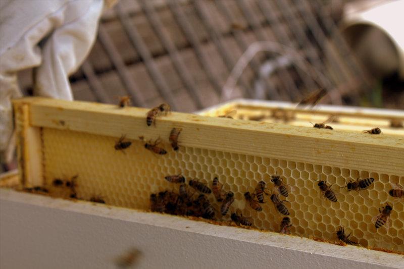 Bee Hive no.3