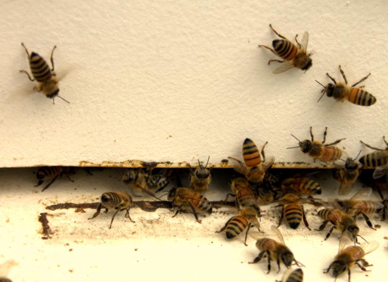 Bee Hive no.4