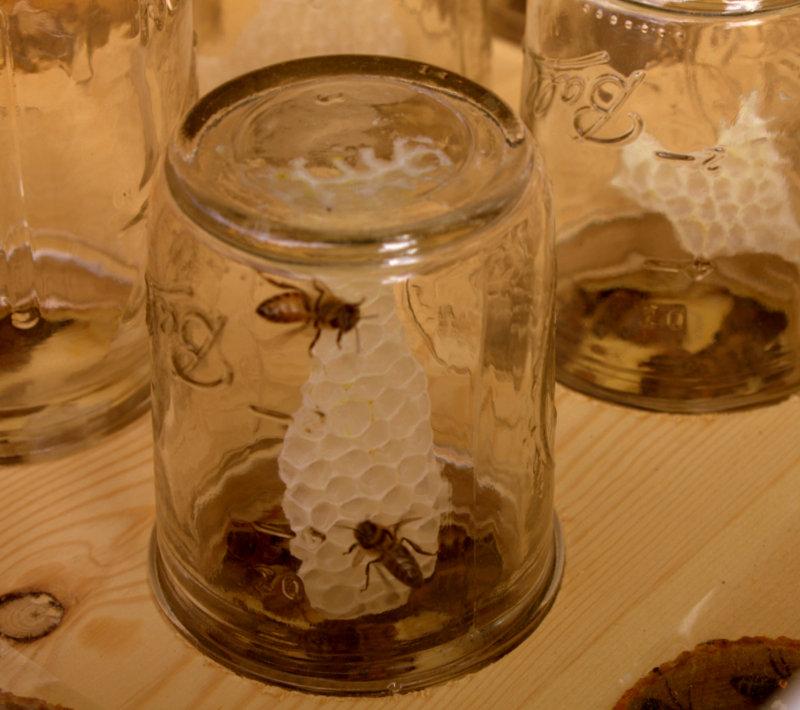 Bee Hive no.5