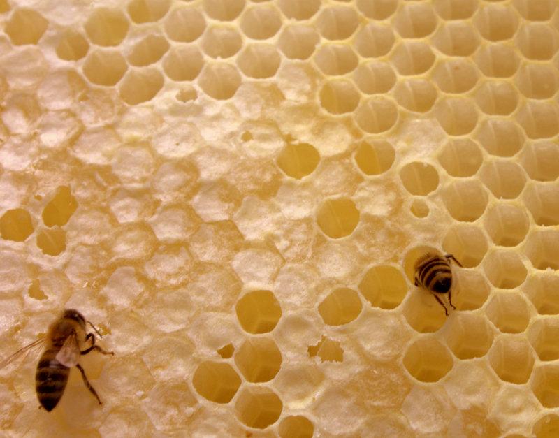Bee Hive no.1