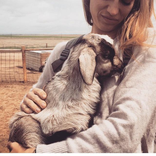 Cashmere Goat no.5