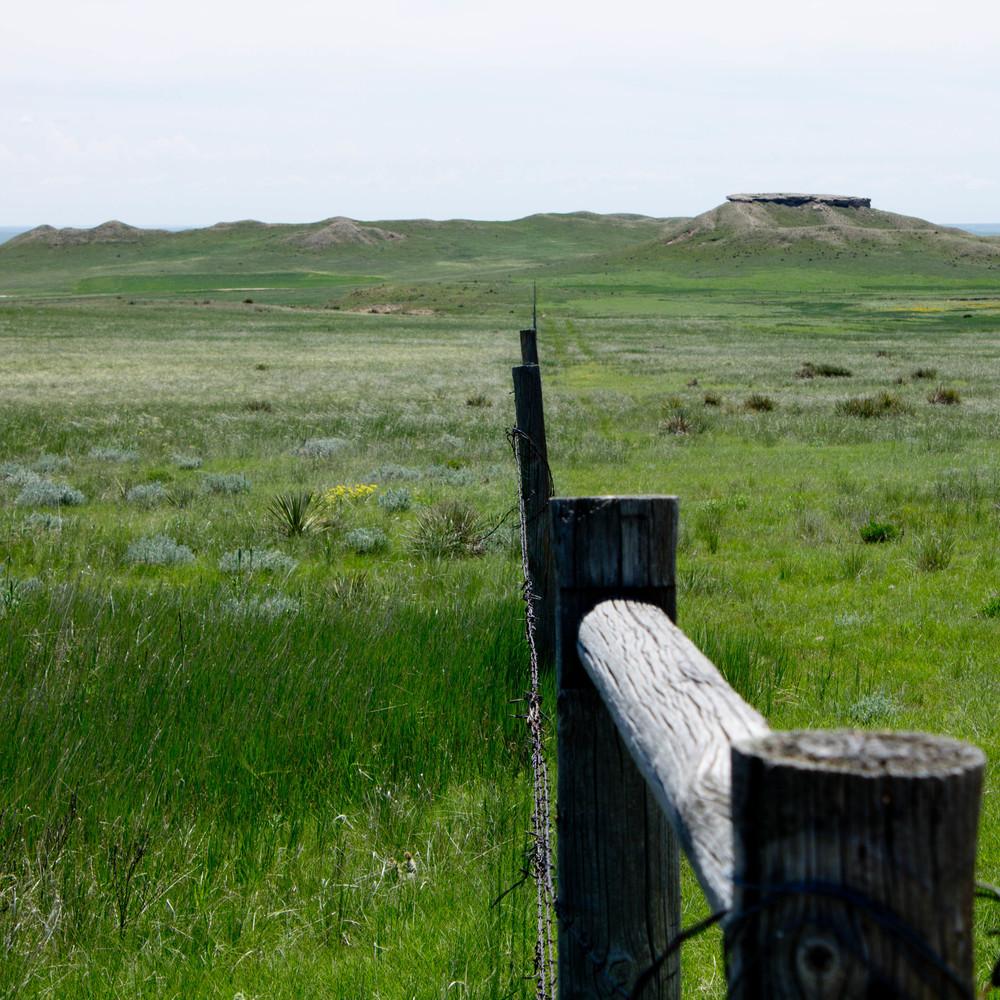 Grassland no.2