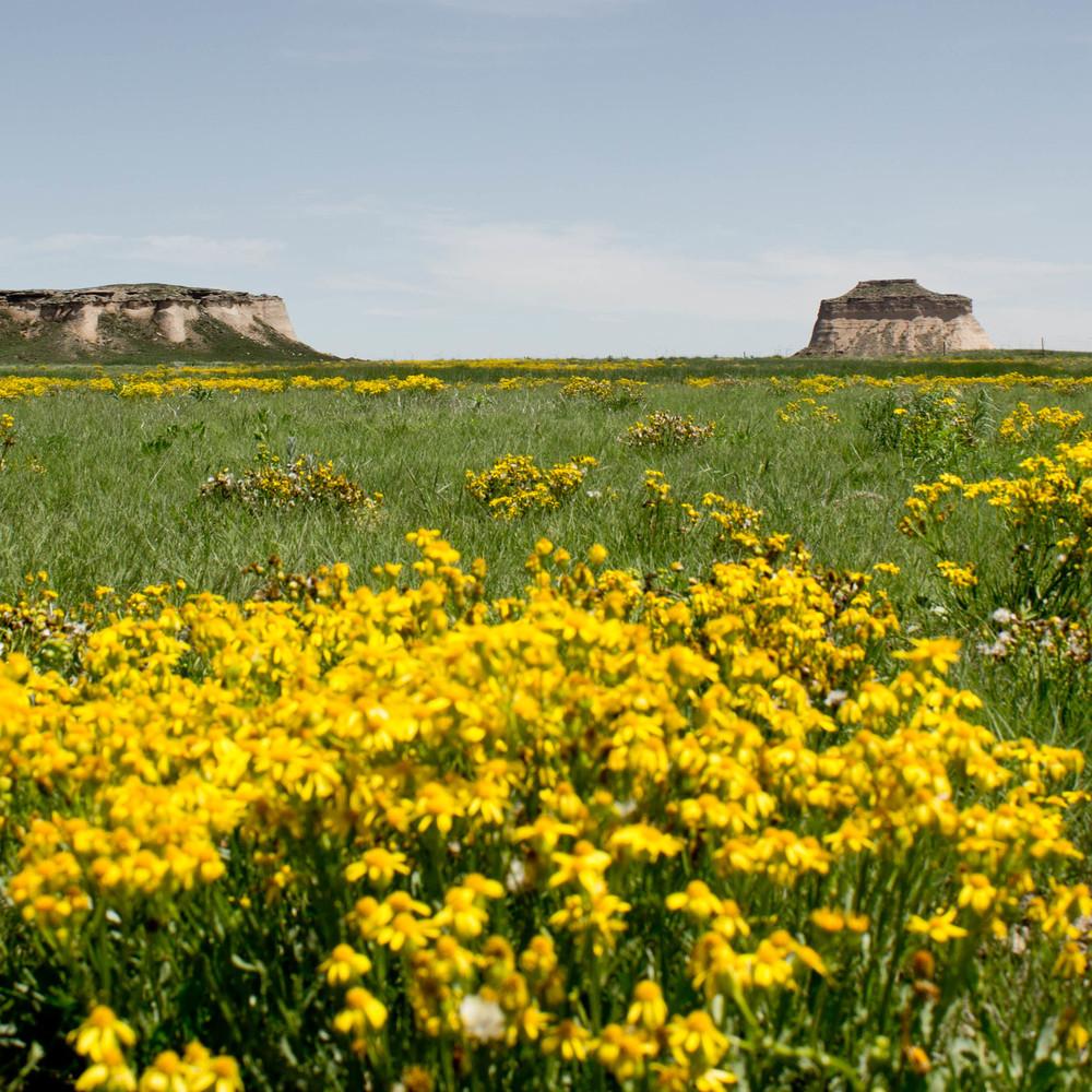 Grassland no.1