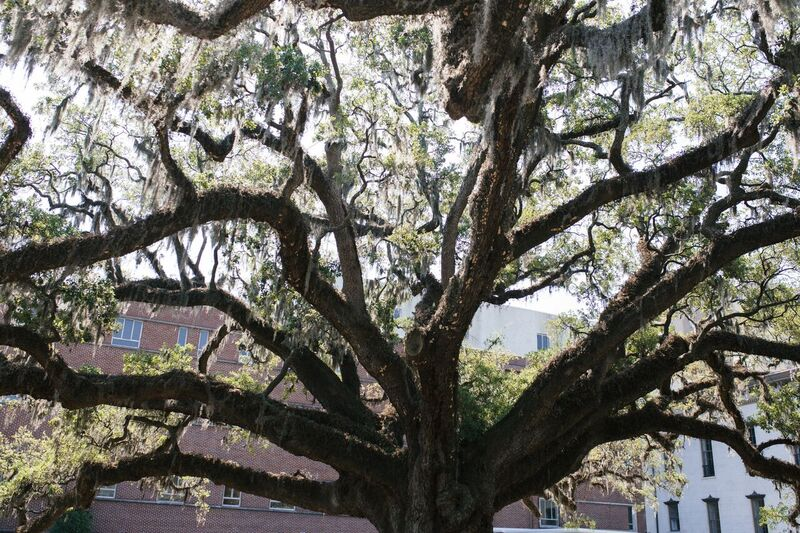 This tree is 300 YEARS OLD!!!