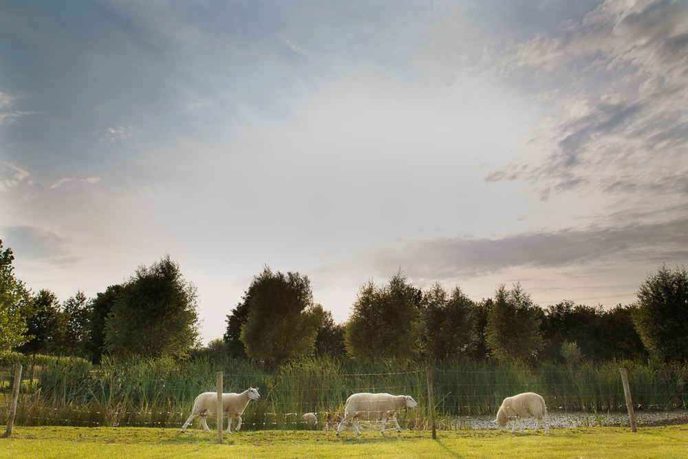Bo & Sören trouwden op een dag die gemaakt leek te zijn voor een tuinfeest - warm maar niet té warm, zonnig maar niet té zonnig. Met speeches waar zelfs ervaren rotten als de huwelijksfotografen van iso800 een lach en een traan voor voelden opwellen, goedgemutste schapen en varkens en een koppel dat elkaar smoorverliefd zat op te eten trokken de foto's zichzelf. Wij verlieten het Klokhof compleet voldaan. Sfeerbeeld van de omgeving, een schapenwei naast een vijver.