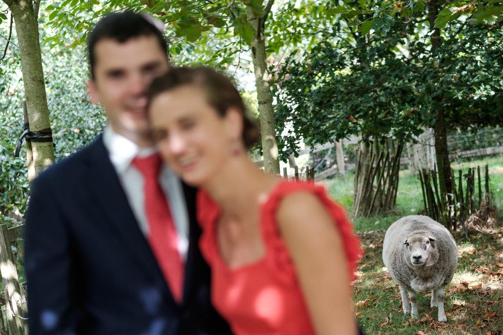 Sofie en Bernard hadden het privilege om in de tuin van de ouders van de bruidegom hun trouwfeest te houden. Geen slecht idee, zo bleek. De huwelijksfotografen van iso800 waren gelukkige getuigen. Eén van de getuigen poseert samen met haar vriend, maar het schaap dat loert in de achtergrond steelt de show!
