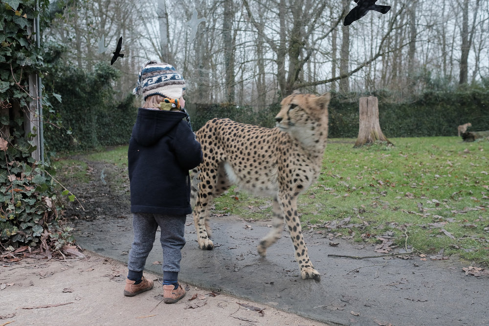 iso800-day in the life-fuji camera-home-family-leopard