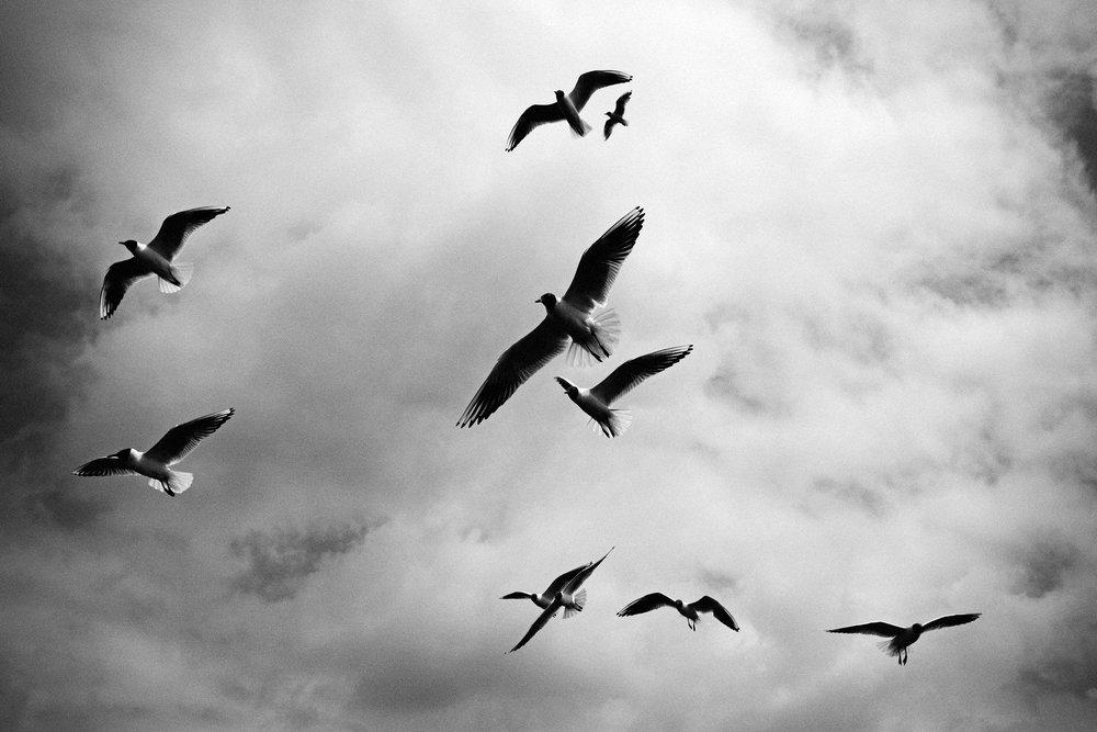 birds-1081690_1920.jpg