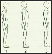 Postural Choices: 1 Overly slack  2 Overly tense  3 Balanced