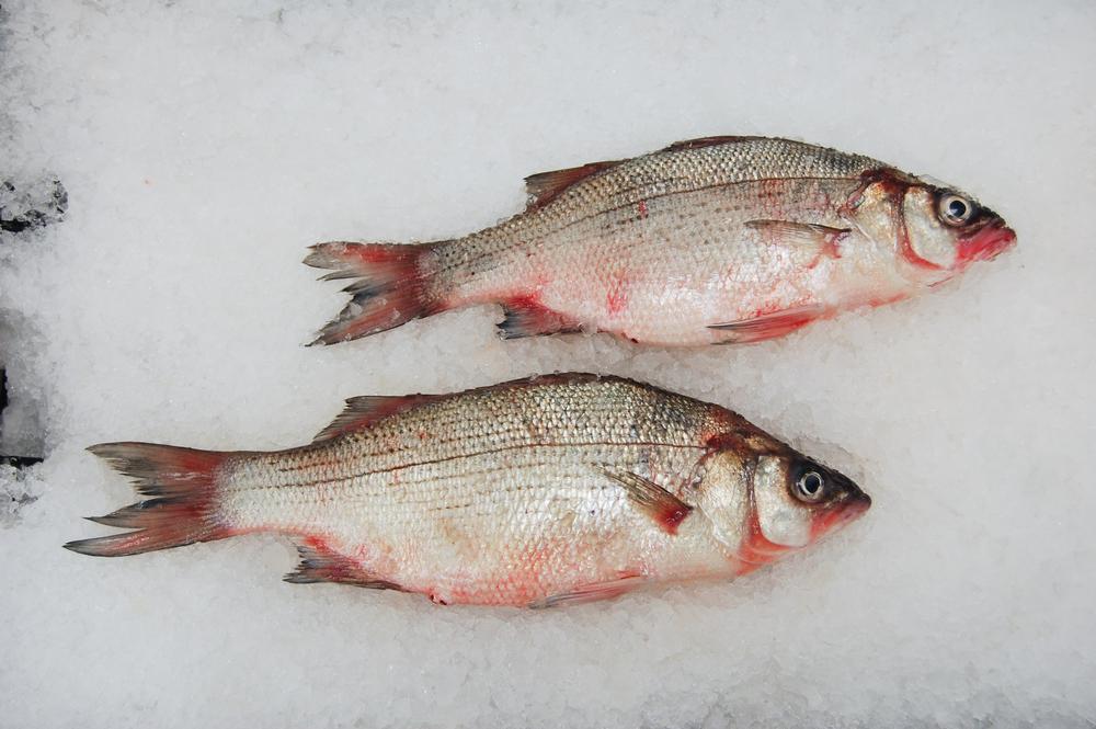 Bass, White