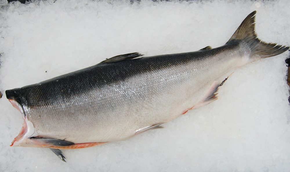 Sockeye Salmon Season: June - August Frozen: Availability varies