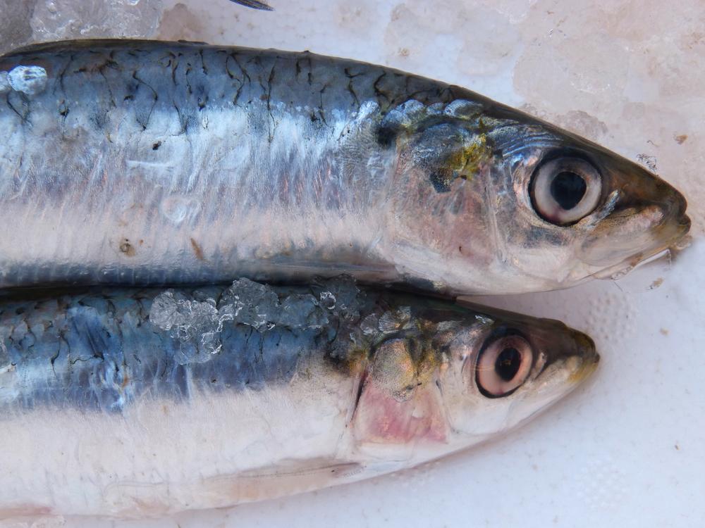 Sardines - Fresh