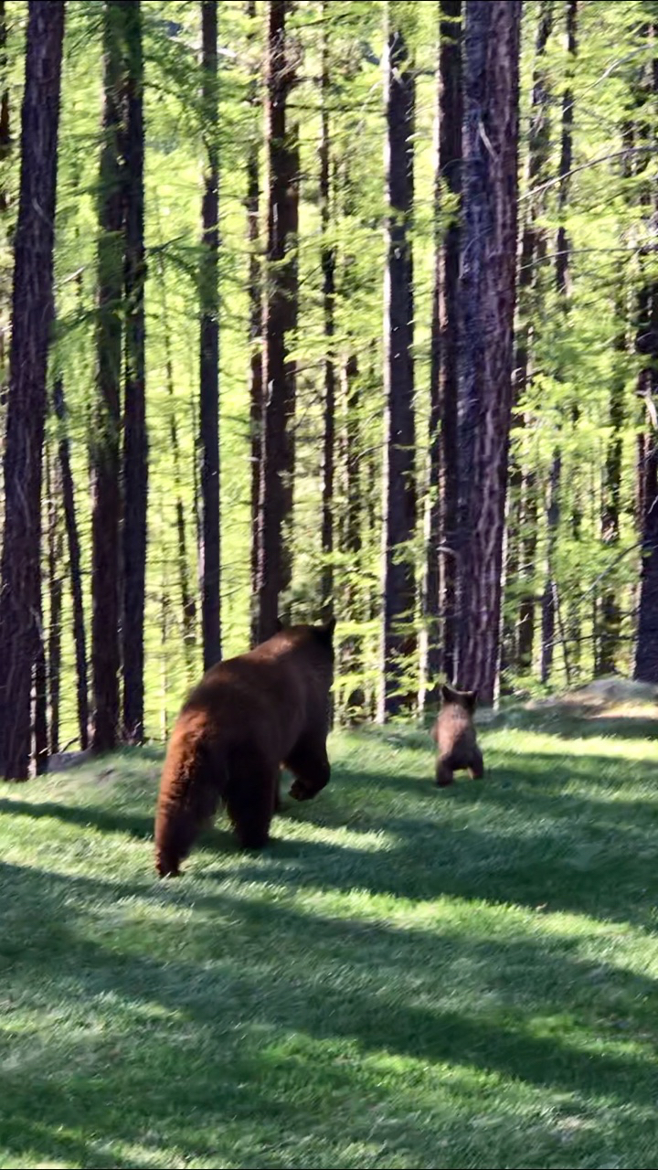Mom and baby brown bear 2018 Kimberley BC .jpg