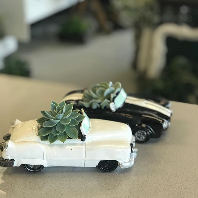Just cruisin' . . . #succulents #car #succulentyqr #wascanaflowers