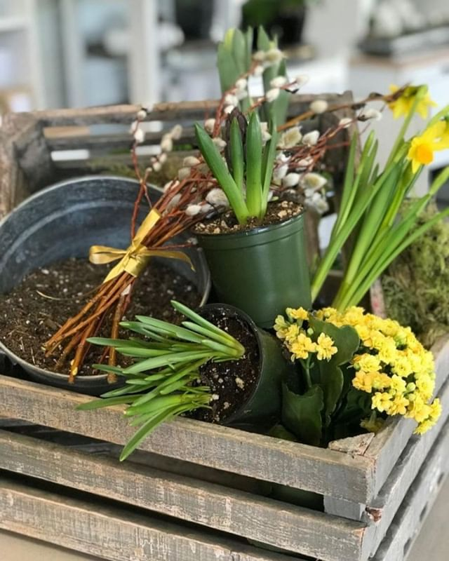 NEW SPRING WORKSHOPS! Join us Tuesday, March 26th at  6:30 PM for the first of four new spring workshops. Register online and create your very own spring bulb garden.  https://ecs.page.link/6UZL . . .  #workshops #yqrworkshop #handmade #wascanaflowershoppe #wascanaflowers #festive #shoplocal #floristsofinstagram