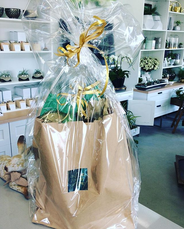 More $40 plant surprise bags are up for grabs while supplies last!