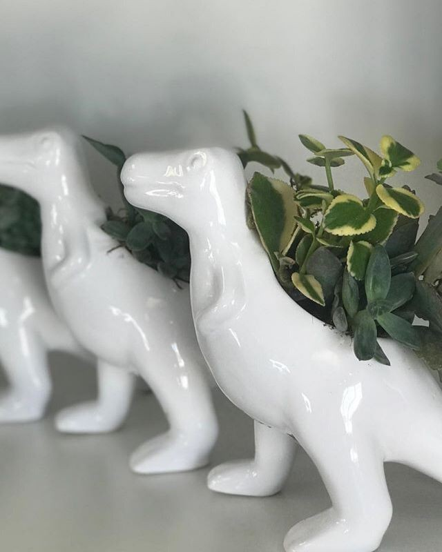 We hope you are having a RAWR-SOME Day! . . .  #wascanaflowers #yqrflowers #shoplocalyqr #plantsofinstagram #instabloom #plantlover #succulentlove #green #plants #nature #floristsofinstagram
