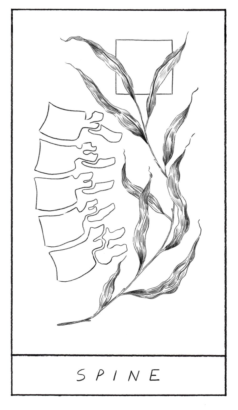 Spine_Final.jpg