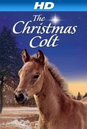 Christmas Colt_1.jpeg