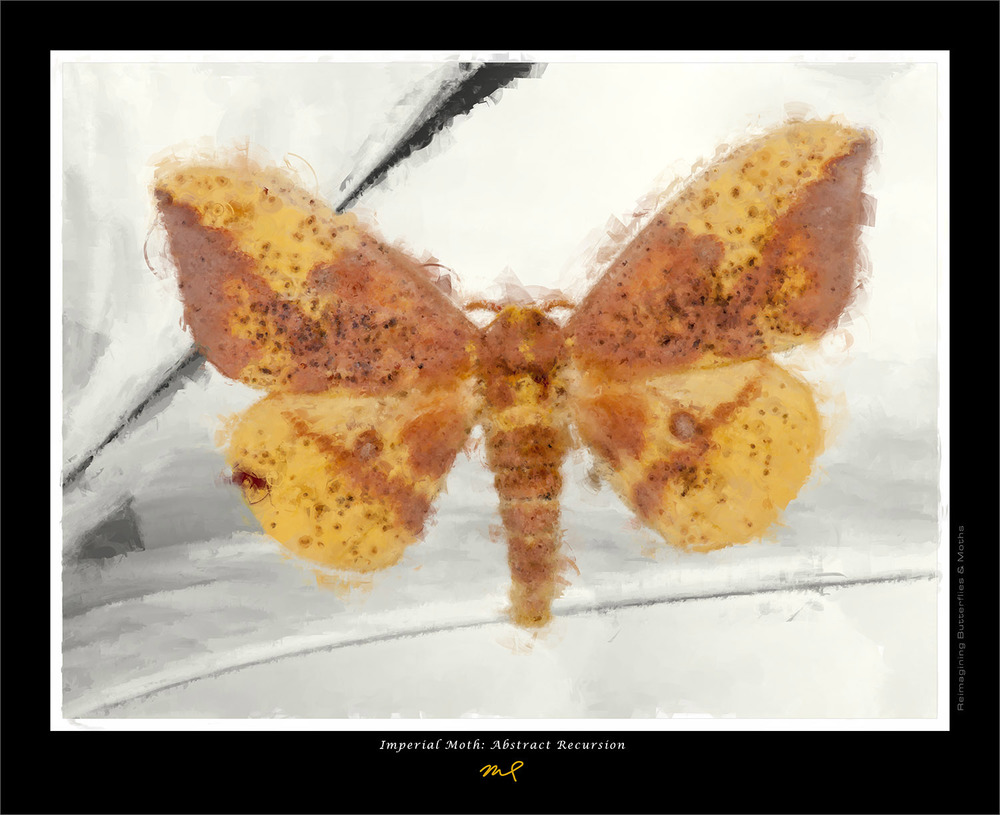 Imperial Moth: Abstract Recursion