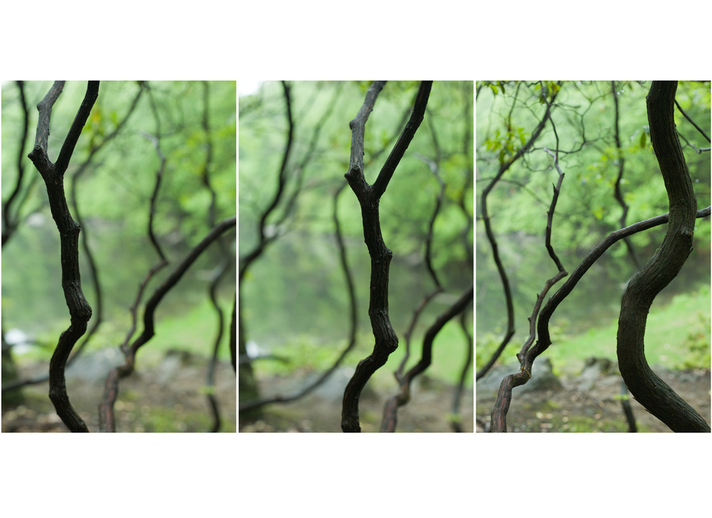 forest trip.jpg