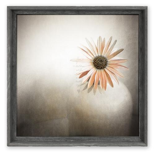 Framed Canvas Art {FAC-166}<br>Orange Daisy — sweet gumball