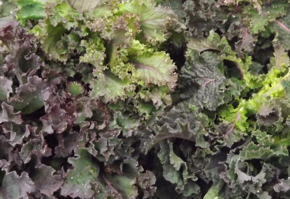 Nash's Organic Kale