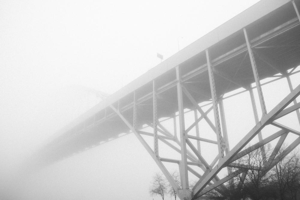 forestpark-3.jpg