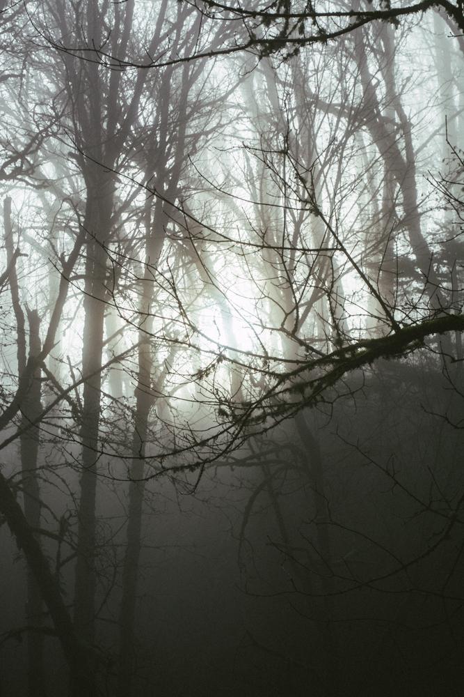 forestpark-4.jpg