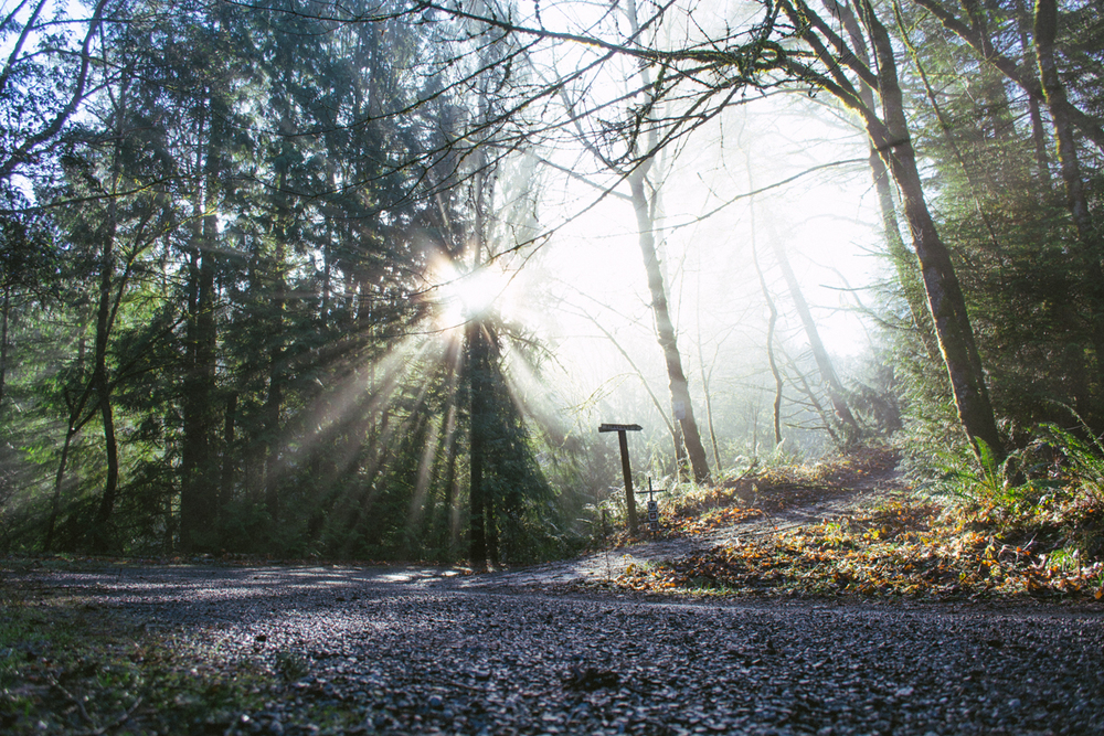 forestpark-5.jpg
