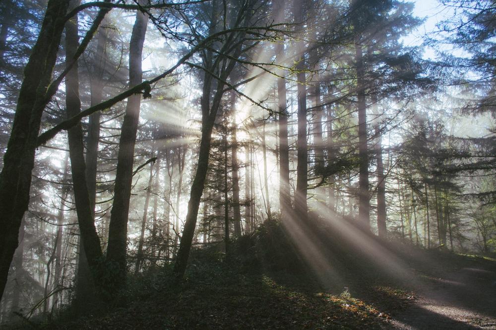forestpark-6.jpg