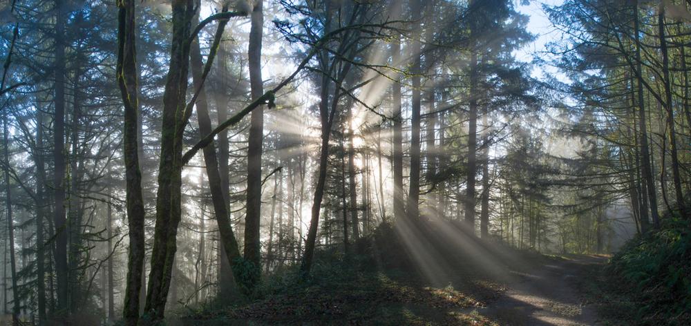 forestpark-7.jpg