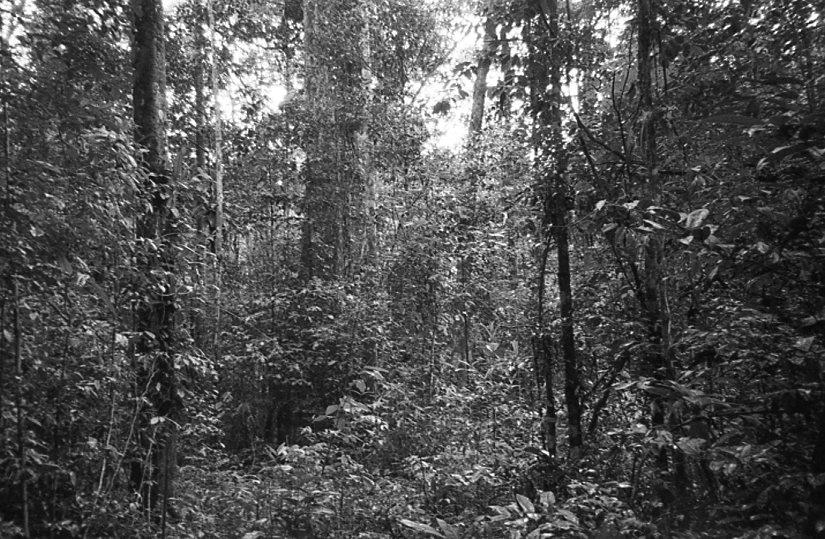 Suriname-SMKM-1.jpg