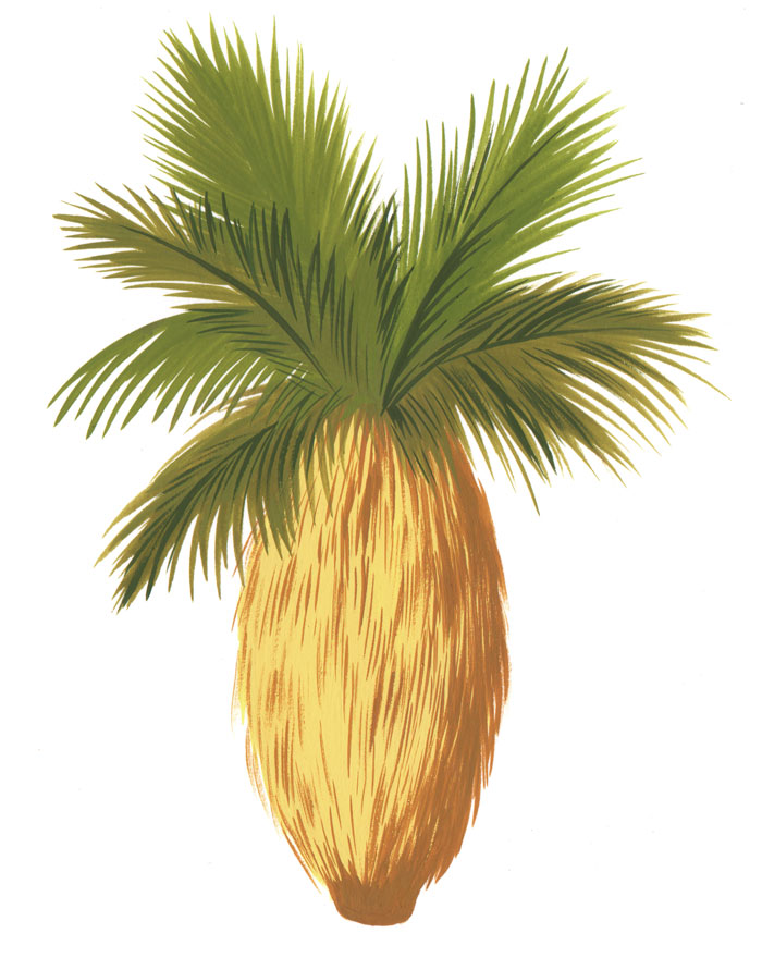 11-California-Fan-Palm-bijou-karman-web.jpg