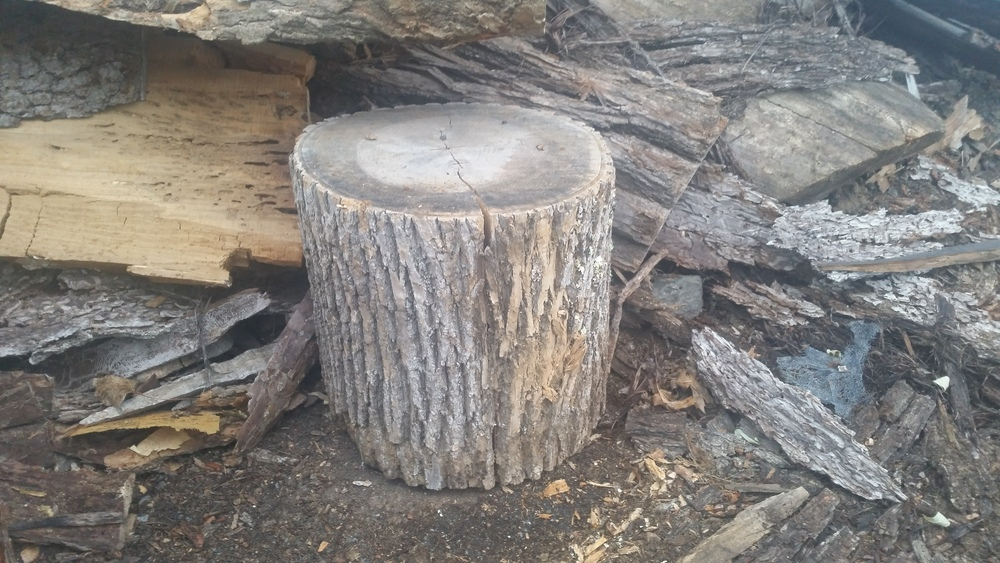 Stumps 1.jpg
