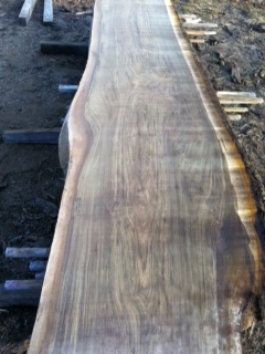 black walnut slabs