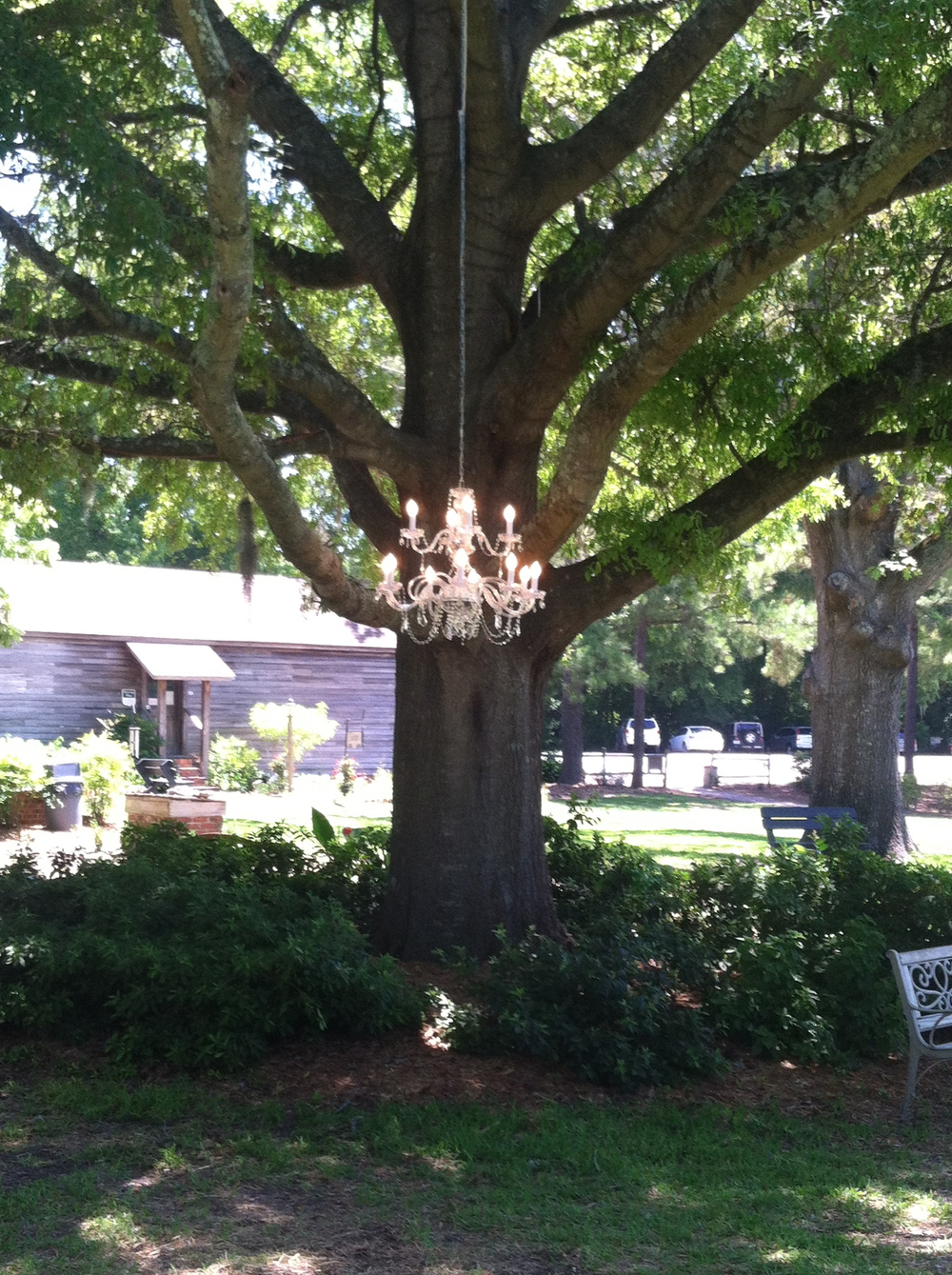 Chandelier hangs from the Big Oak at a Poplar Grove Wedding