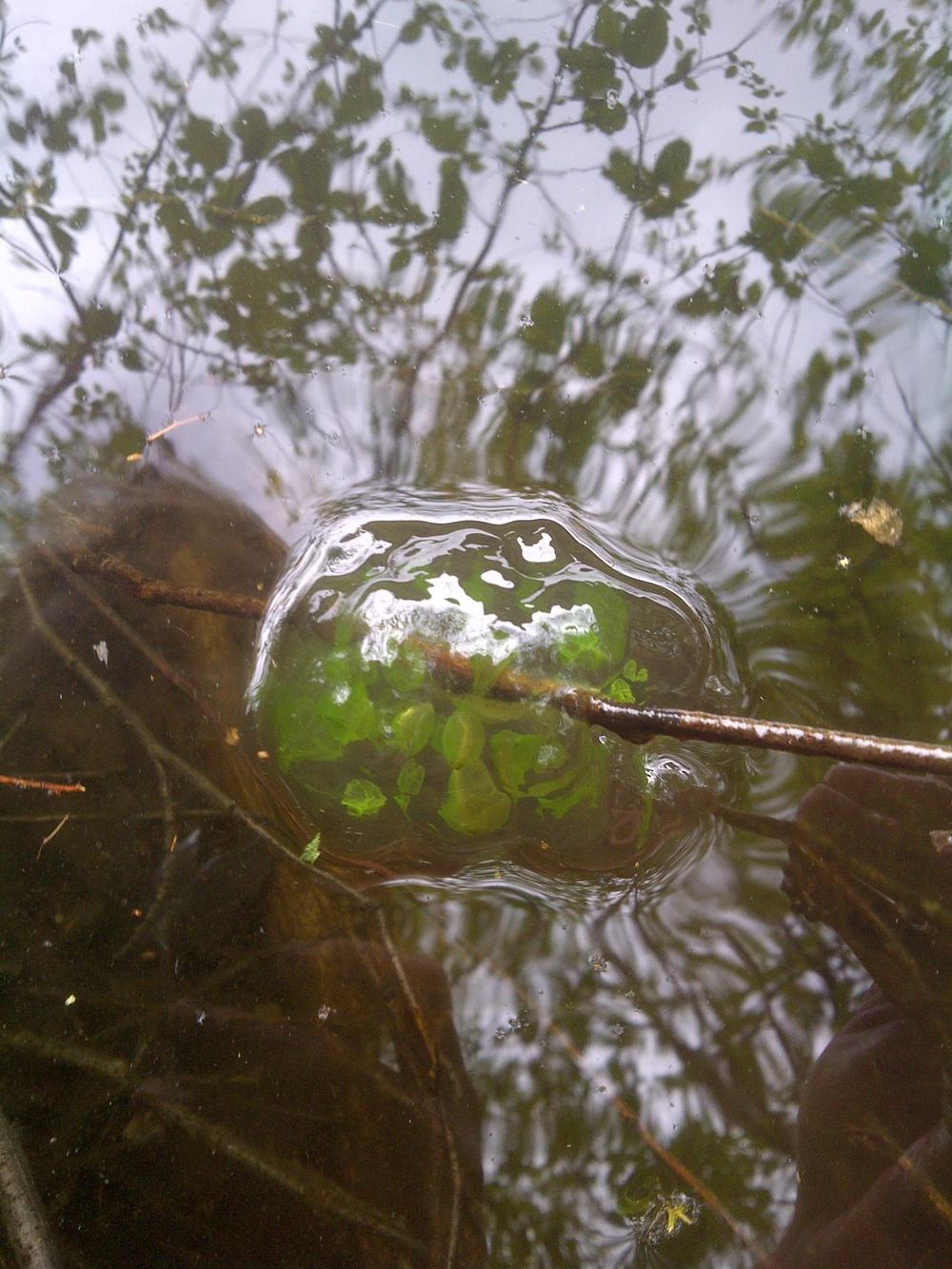 Squamish-Lillooet D-20110531-00066.jpg