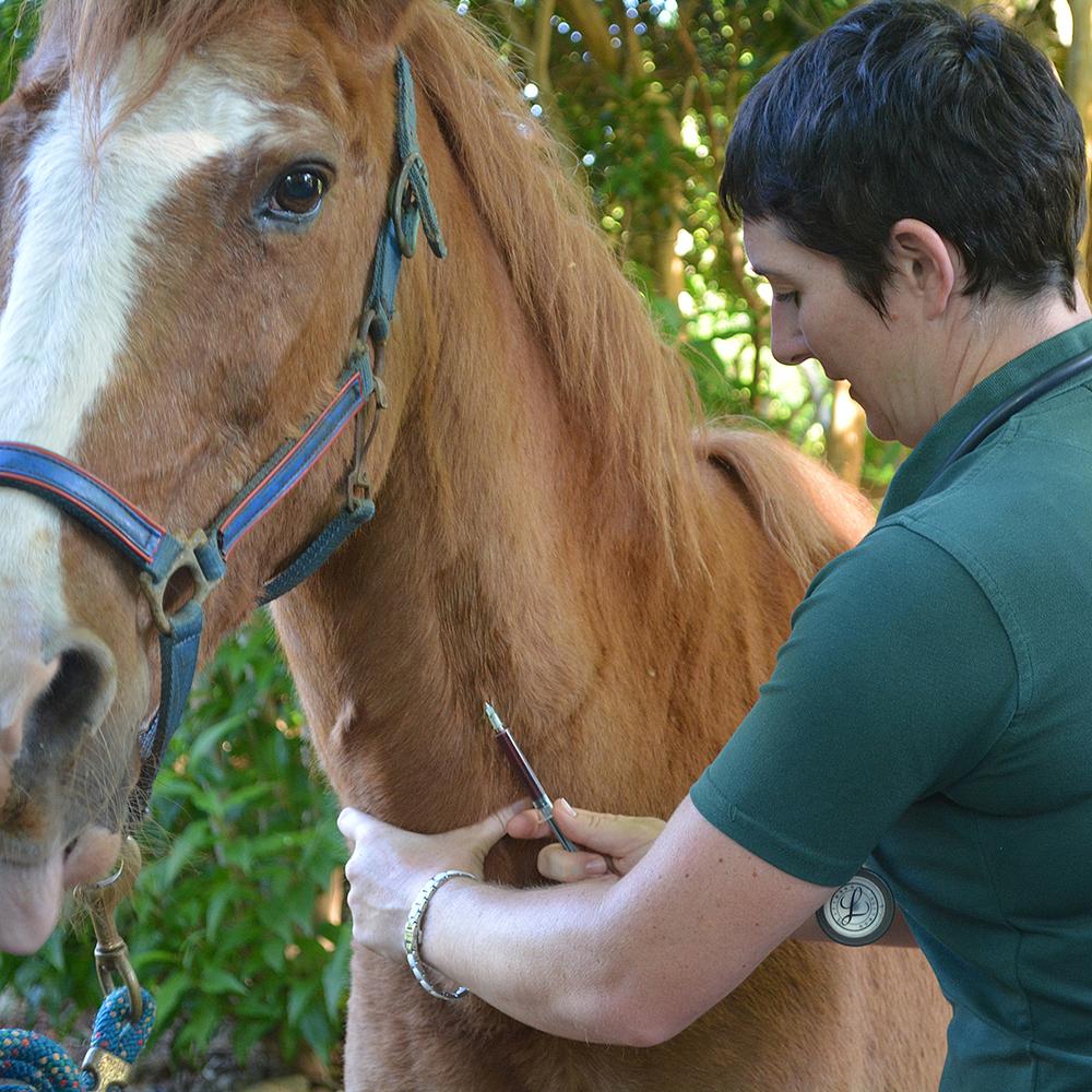 horse bloods cu.jpg