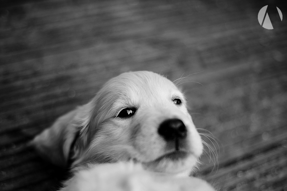 avant-photographic-pets-2.jpg