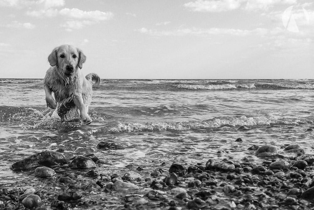 avant-photographic-pets-5.jpg