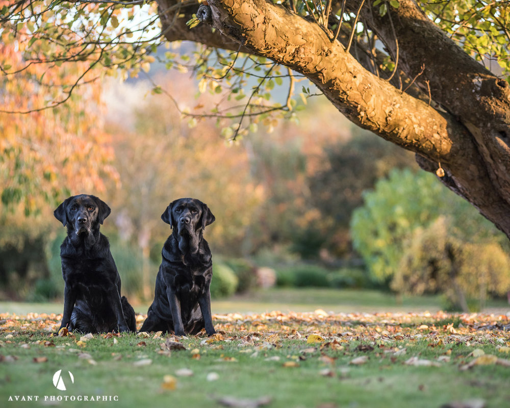 Autumn pet shoot - Sussex