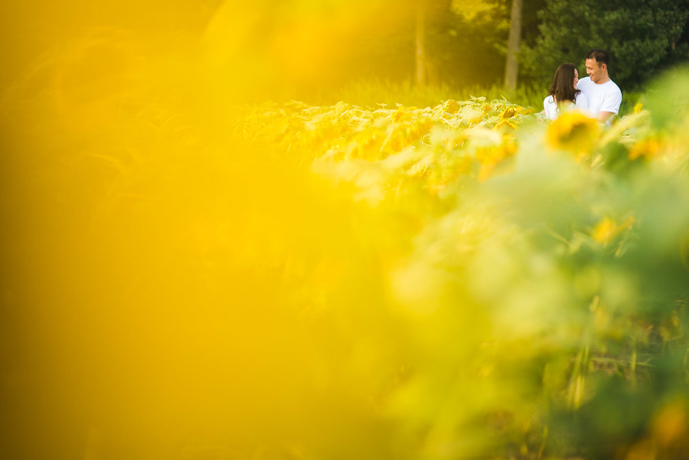 Sunflower Field Maryland Engagement Photographer Mantas Kubilinskas-2.jpg
